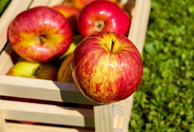 frische Äpfel kann man gut im Quetschie verwenden