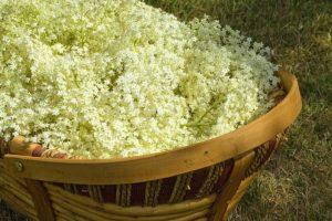 Korb zum sammeln der Holunderblüten