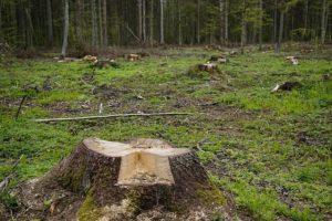 abholzung Regenwald Kaffeeplantage