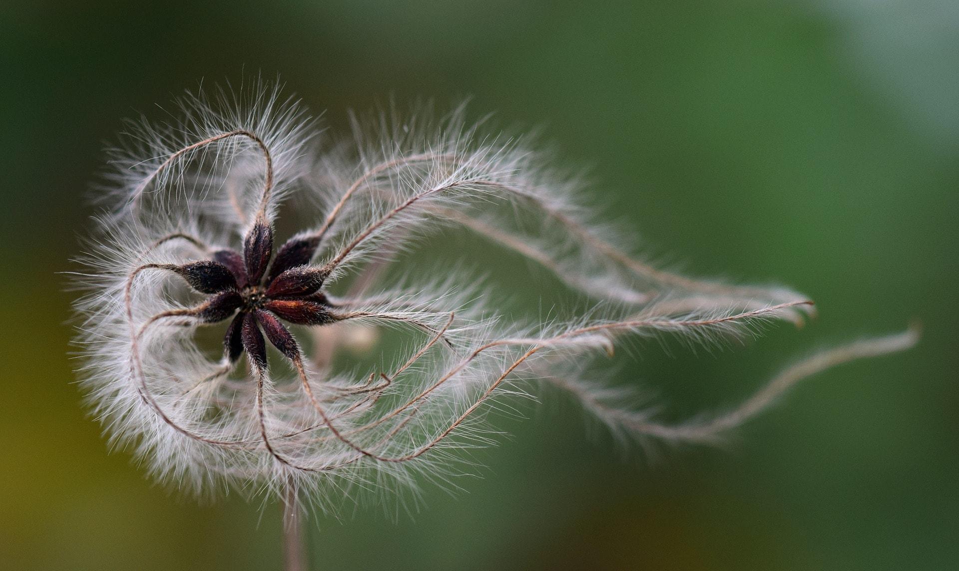 seeds-3013260_1920-min