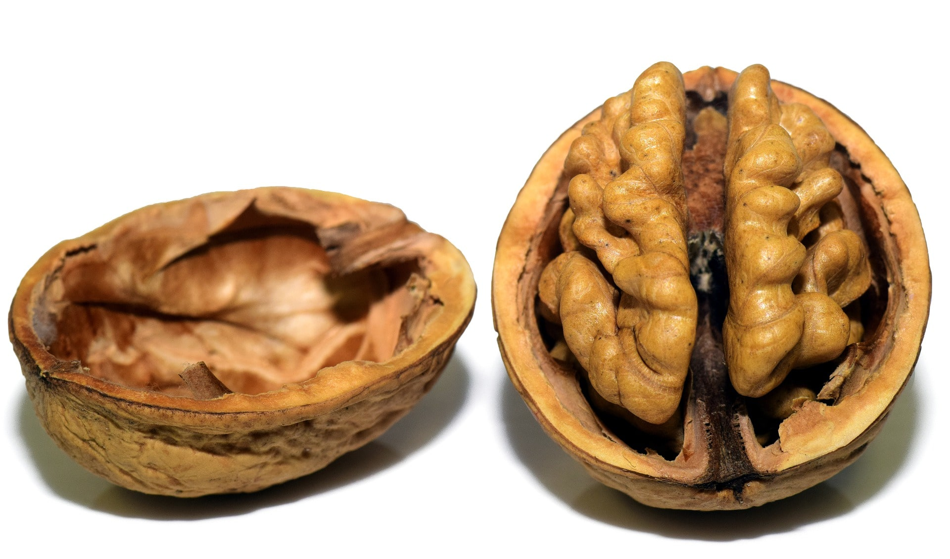 walnut-3072681_1920-min