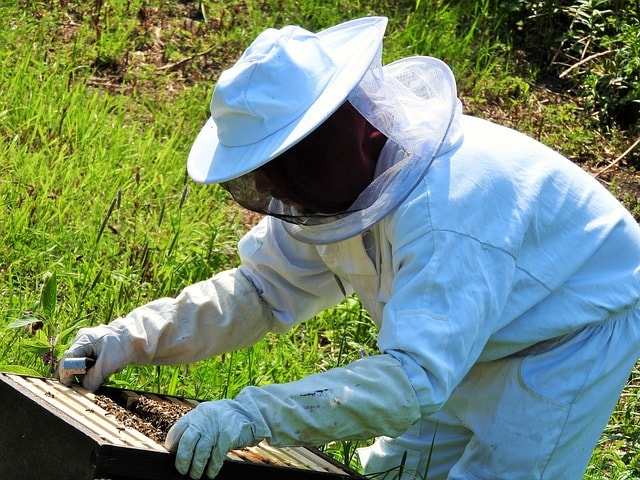 beekeeper-2704962_640-min